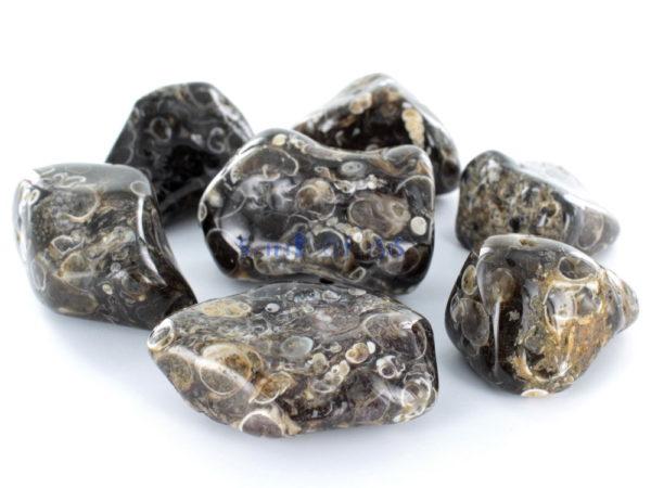 Crystal Tumblestone Turitella Agate